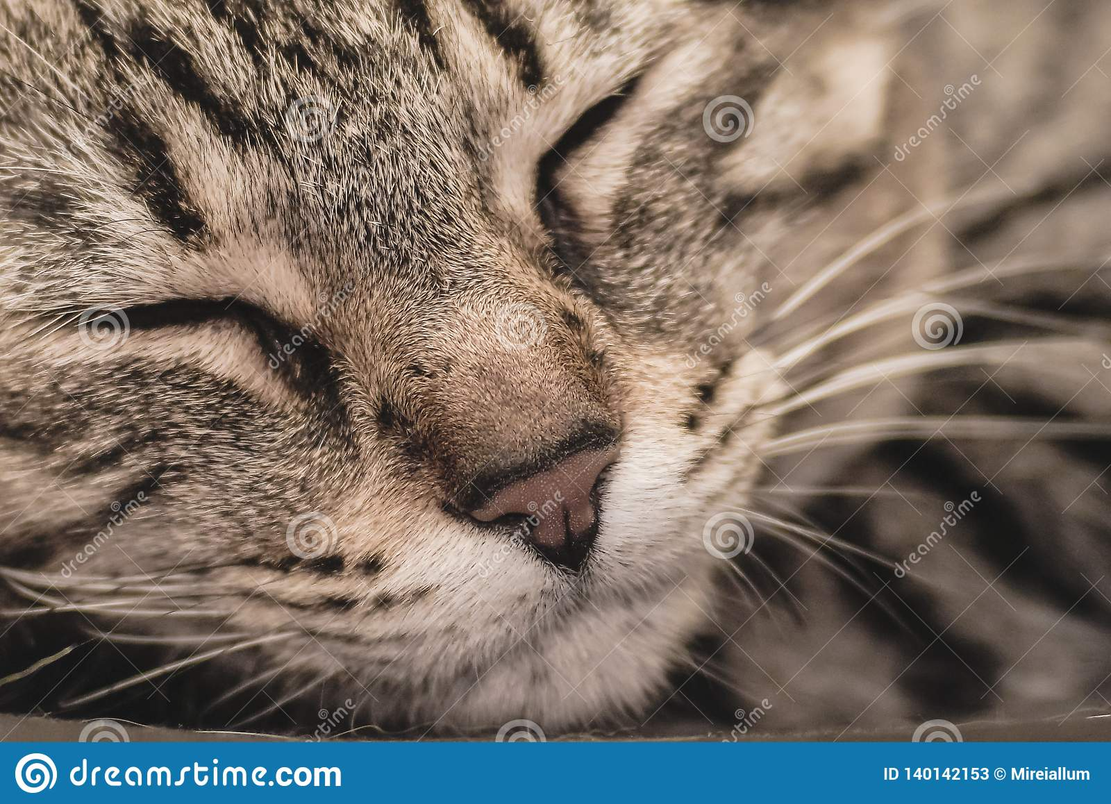 A close up of a a cat sleeping quietly and peacefully.