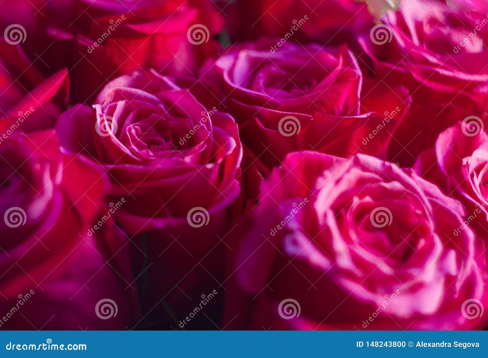 Close-up cor-de-rosa vívido do ramalhete das rosas