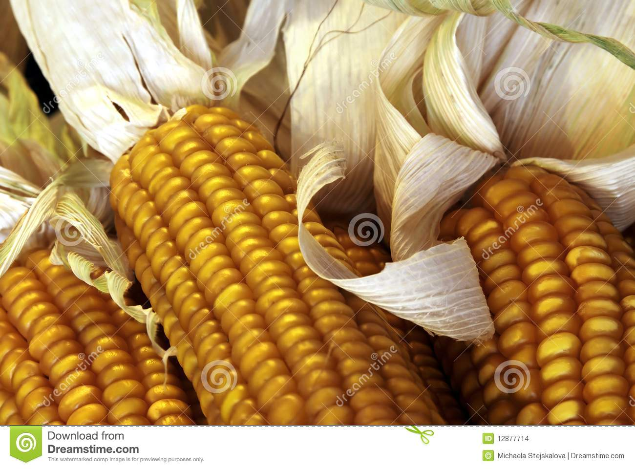 Close up of corn cobs