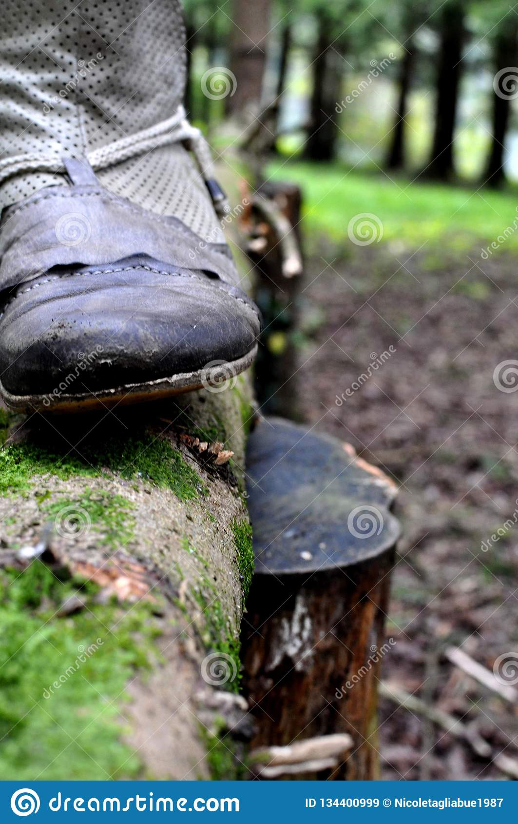 Close up of country western cowboy boot on a trunk of a tree in a green wood - vintage retro style