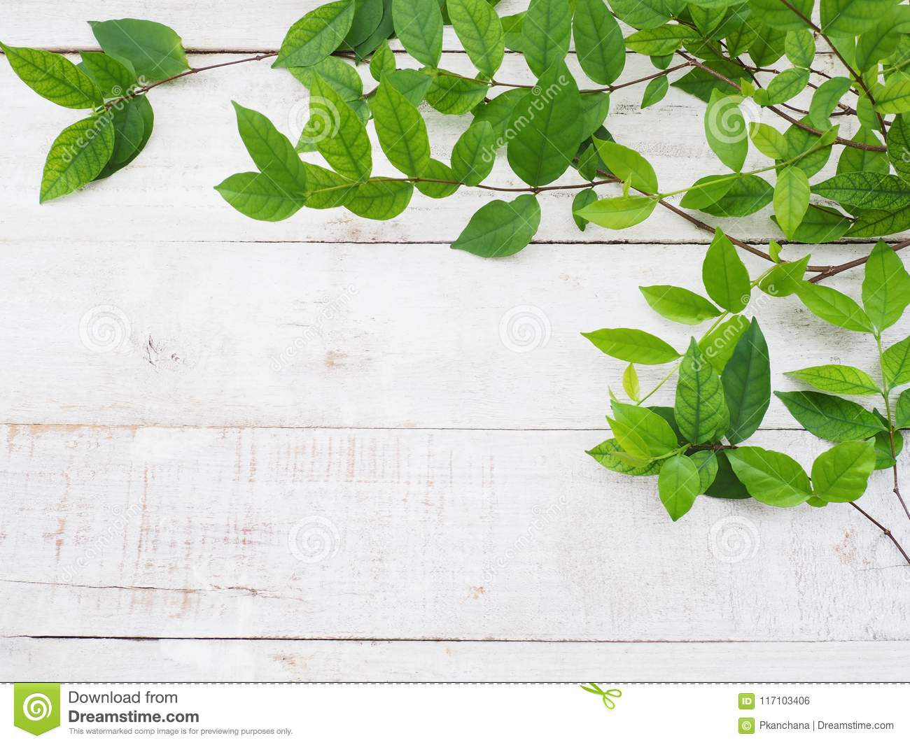 Creeper Plant Green Leaves On White Vintage Wood Stock Photo Image Of Natural Border 117103406