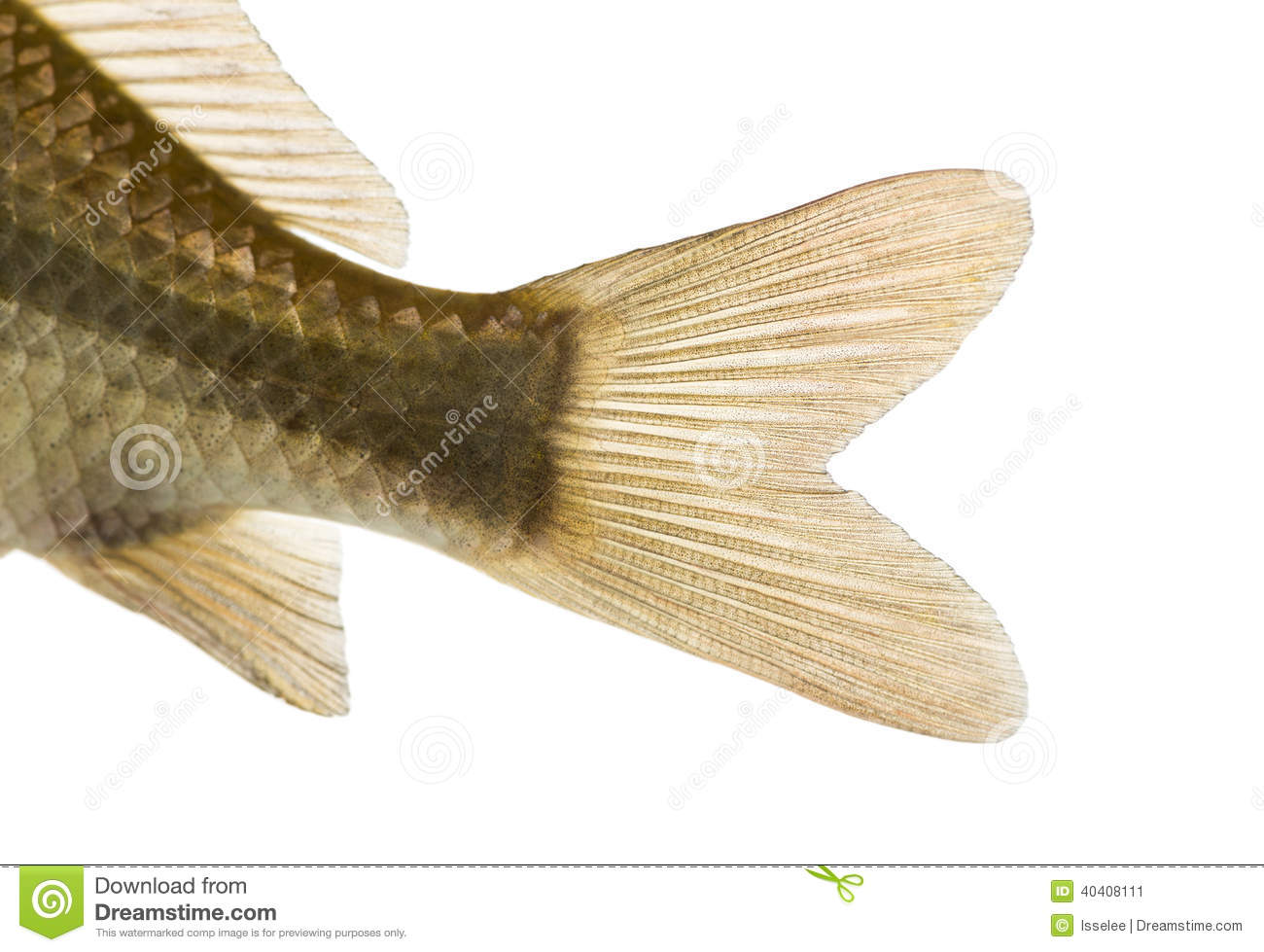 Perch Anatomy - ThingLink