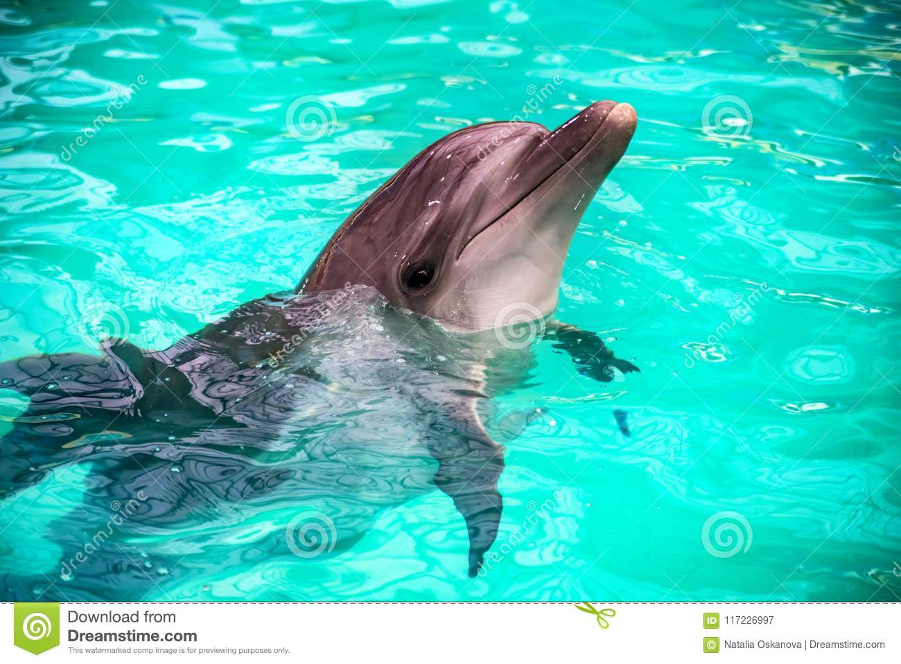 Cute Dolphins In Pool In Dolphinarium Stock Image - Image of ...