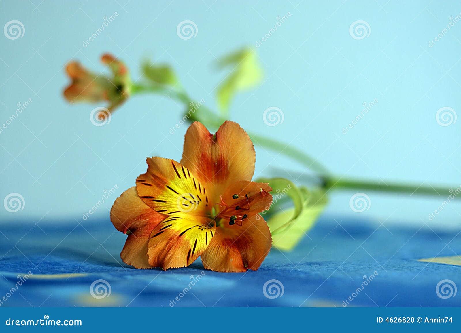 Close up da flor