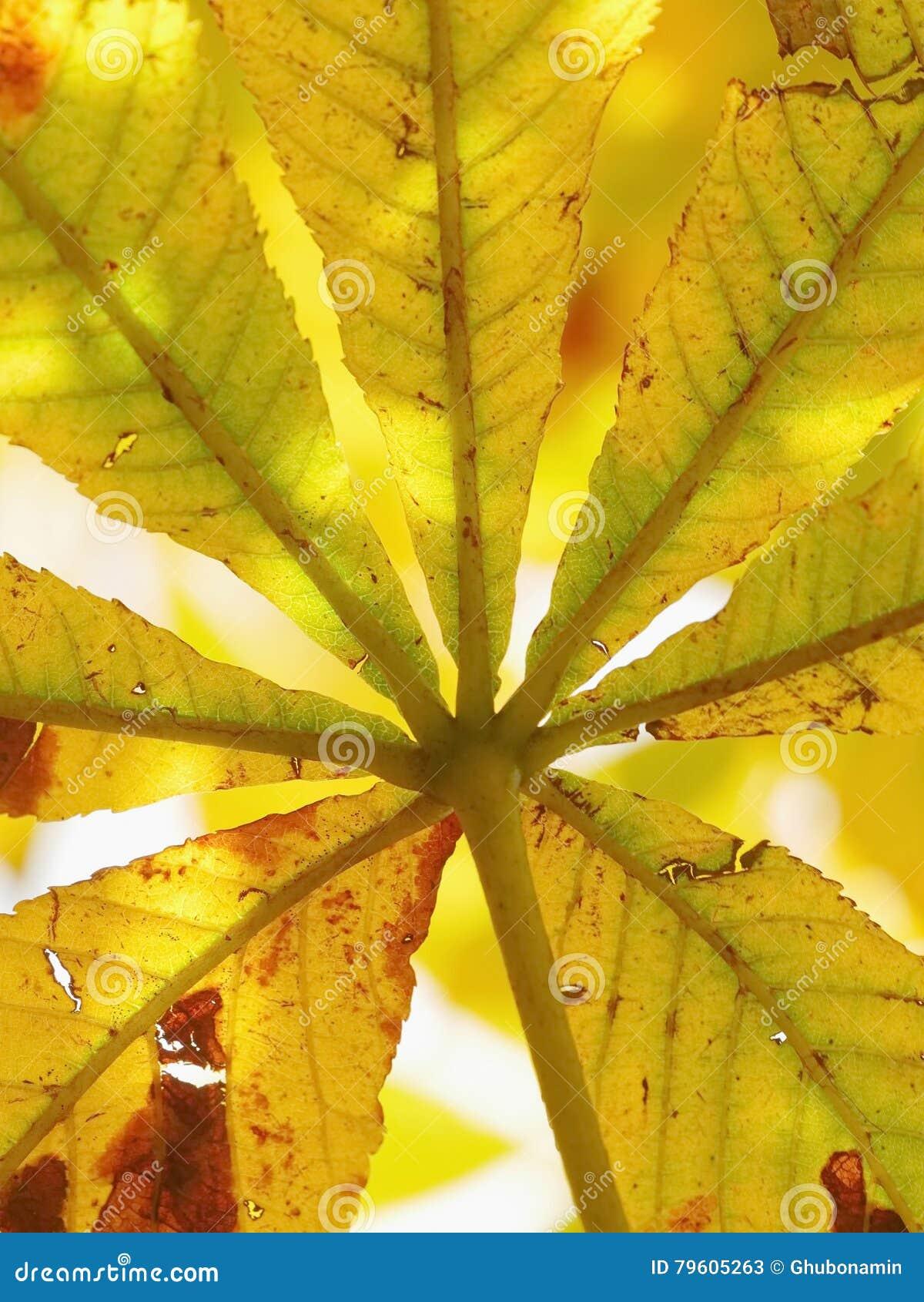 Close-up da folha do outono