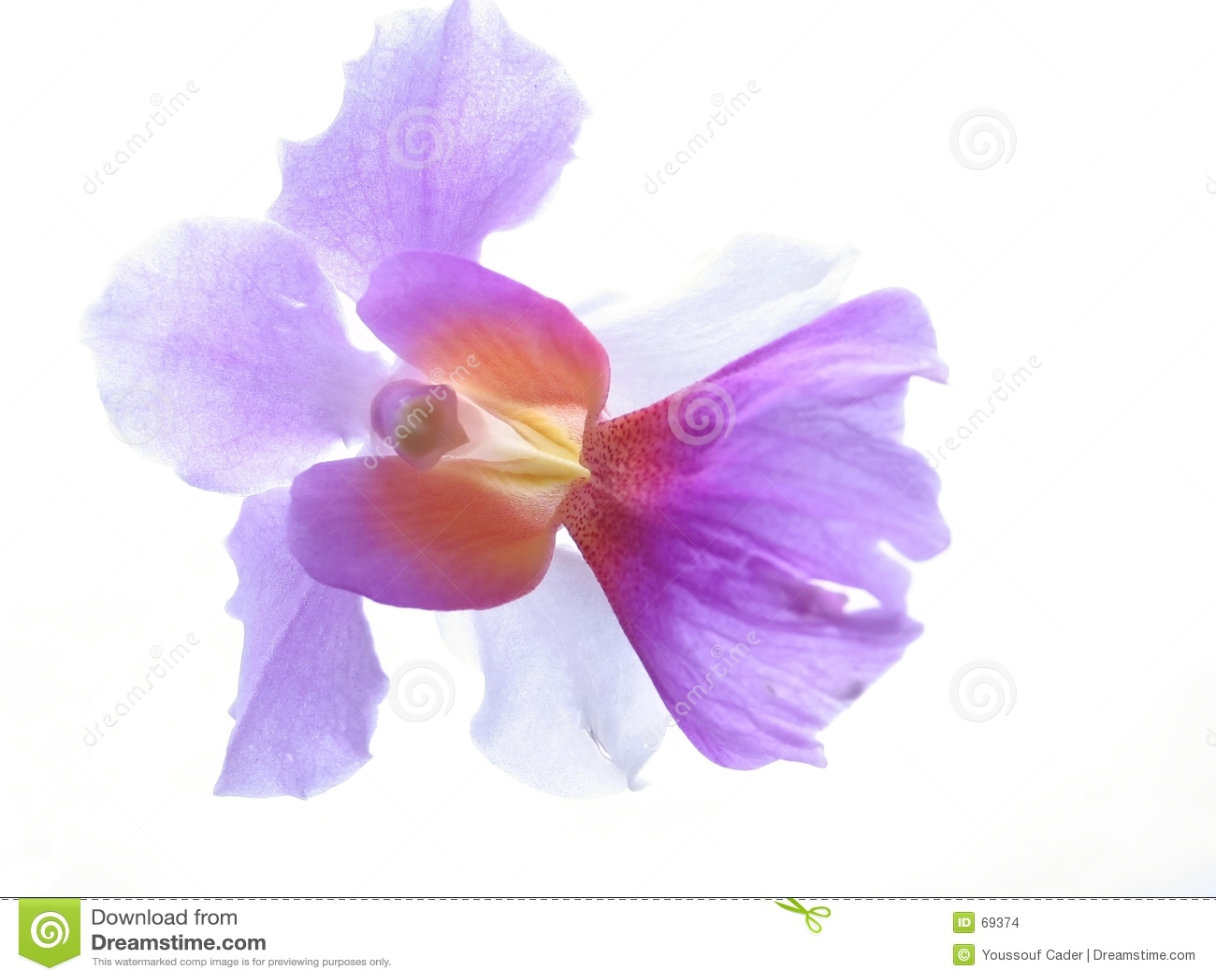 Close up da orquídea