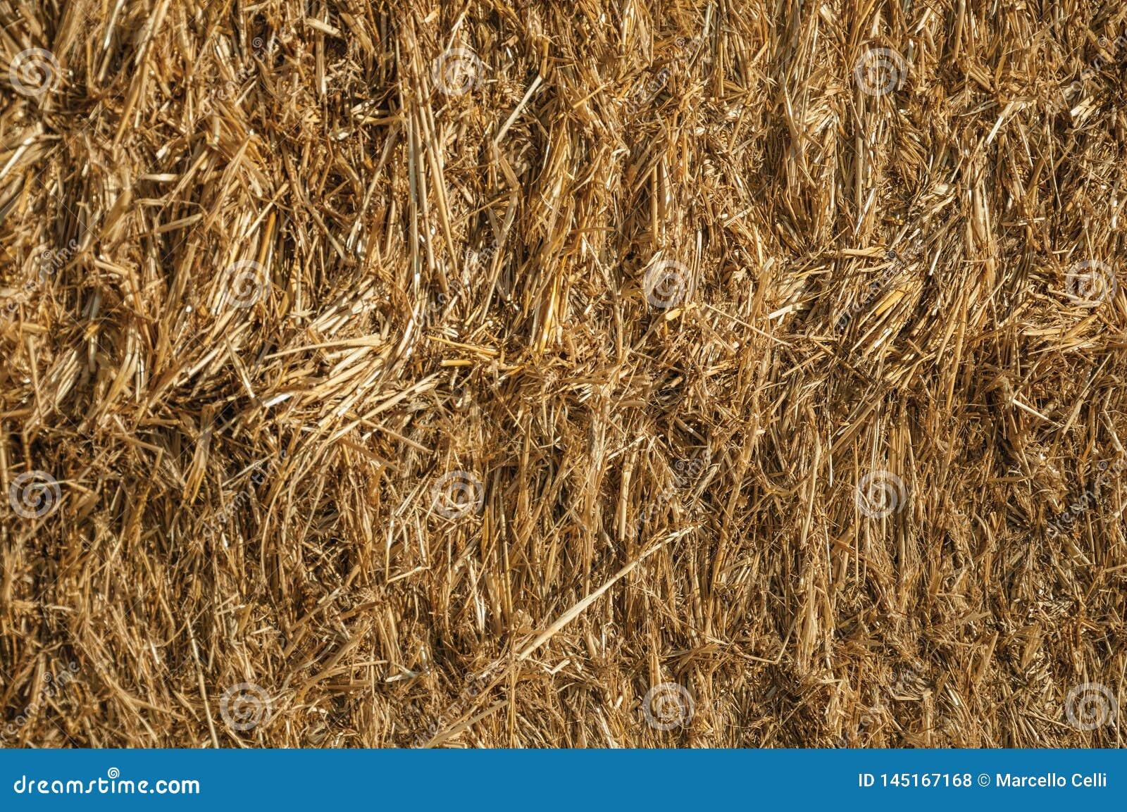 Close-up da palha de um pacote de feno em uma exploração agrícola