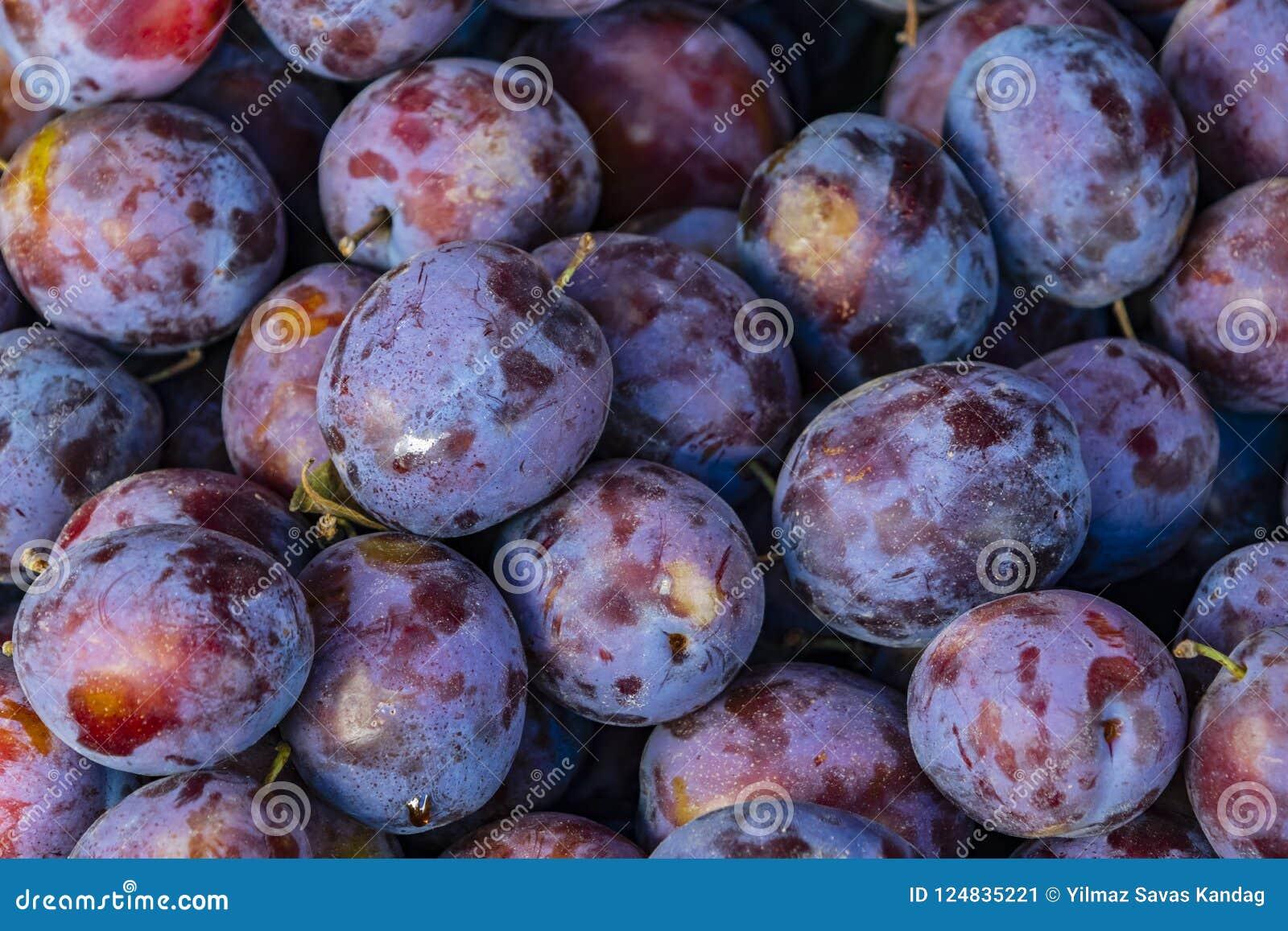 close up damsons. small purple-black plumlike fruit.