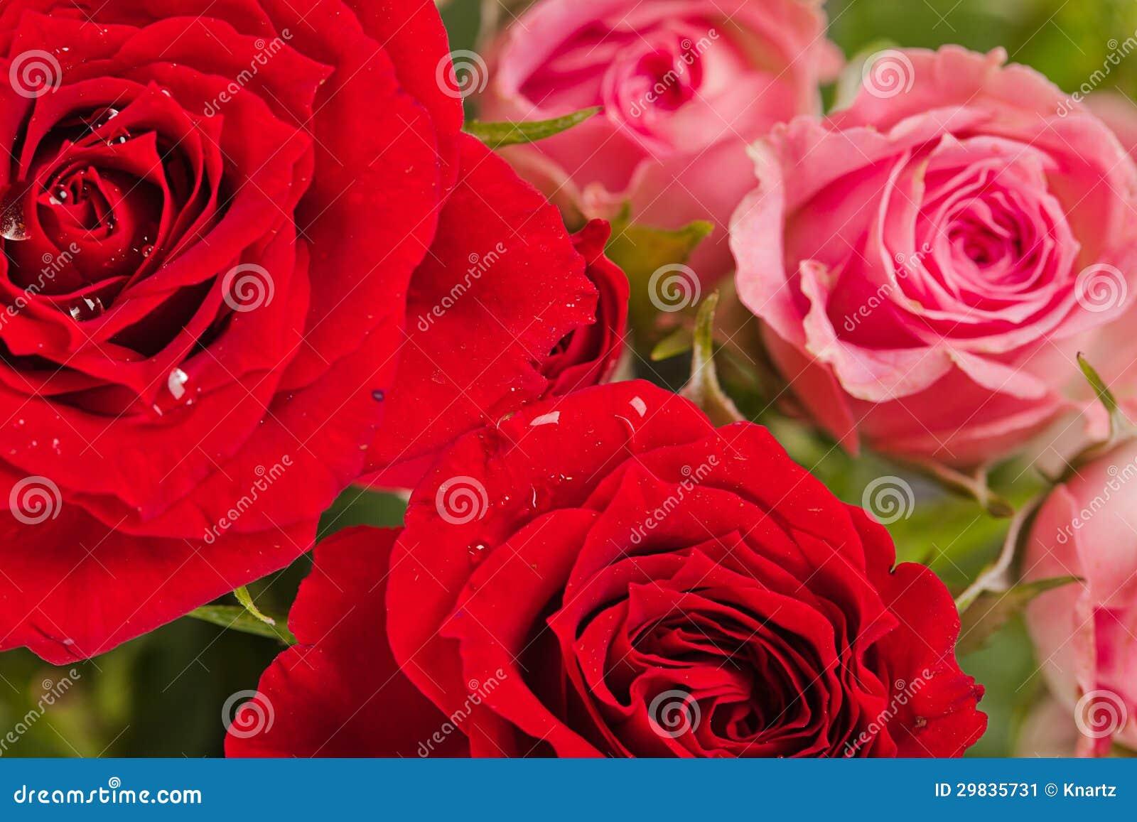 Close up das rosas