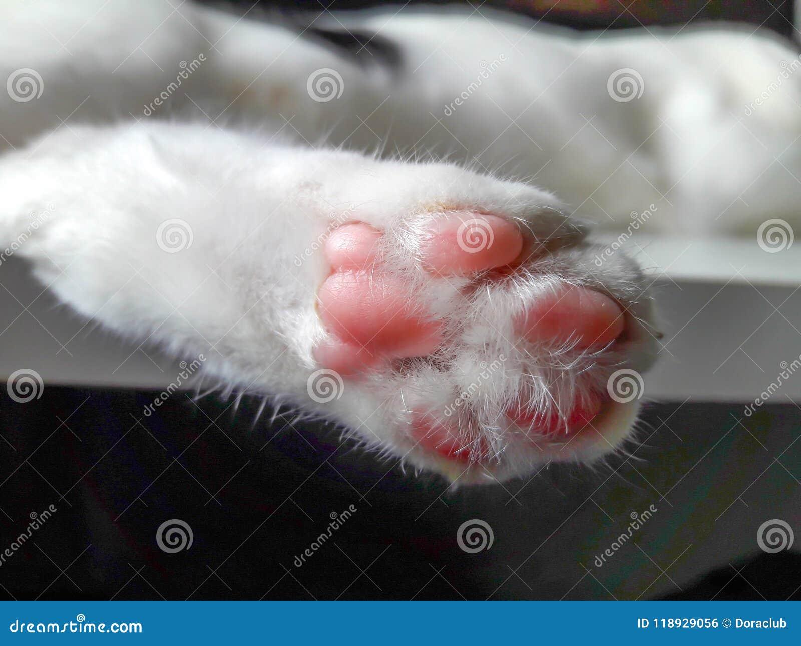 Close up de Cat Paws