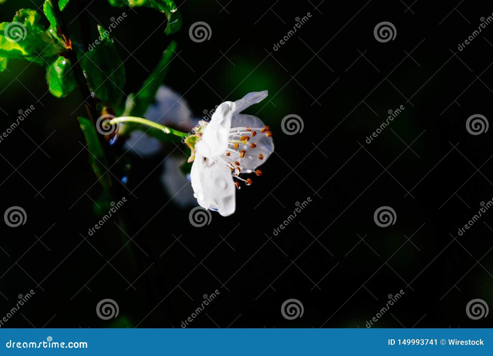 Close up de uma planta de florescência bonita nas madeiras