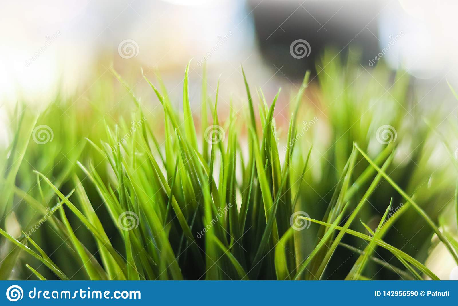 Close-up decorative green grass indoor.