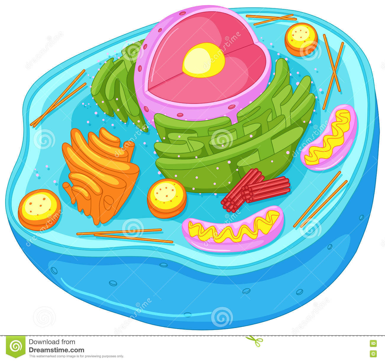 Diagram showing anatomy of animal cell stock vector illustration close up diagram of animal cell stock photos ccuart Gallery