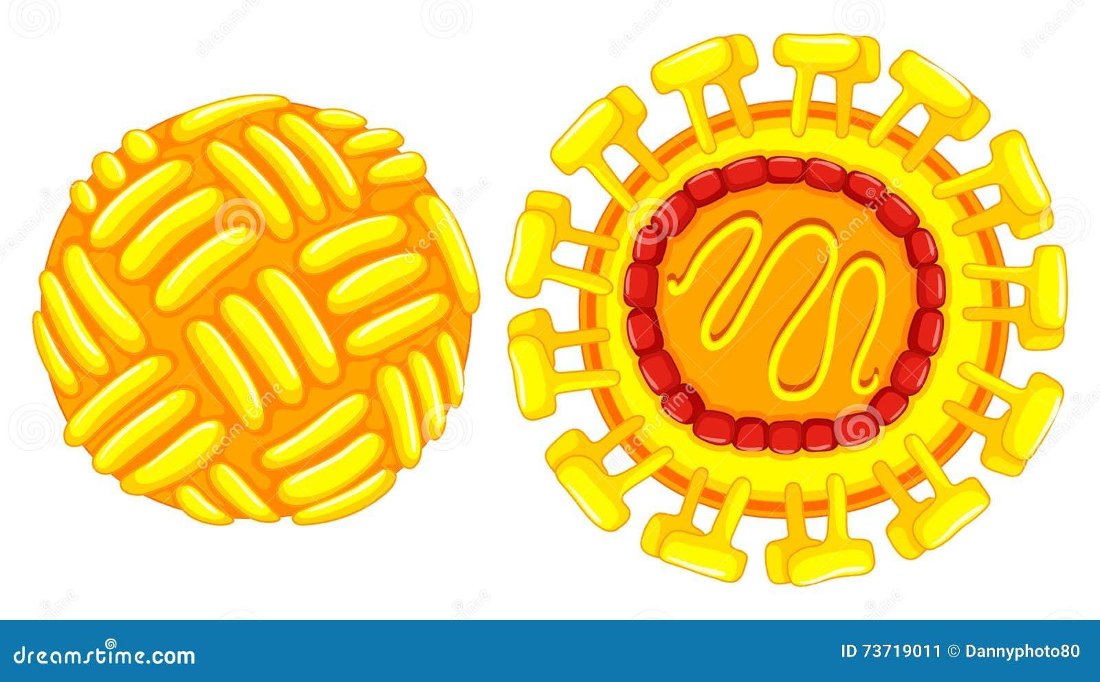 Close Up Diagram Of Zika Virus Stock Vector - Image: 73719011