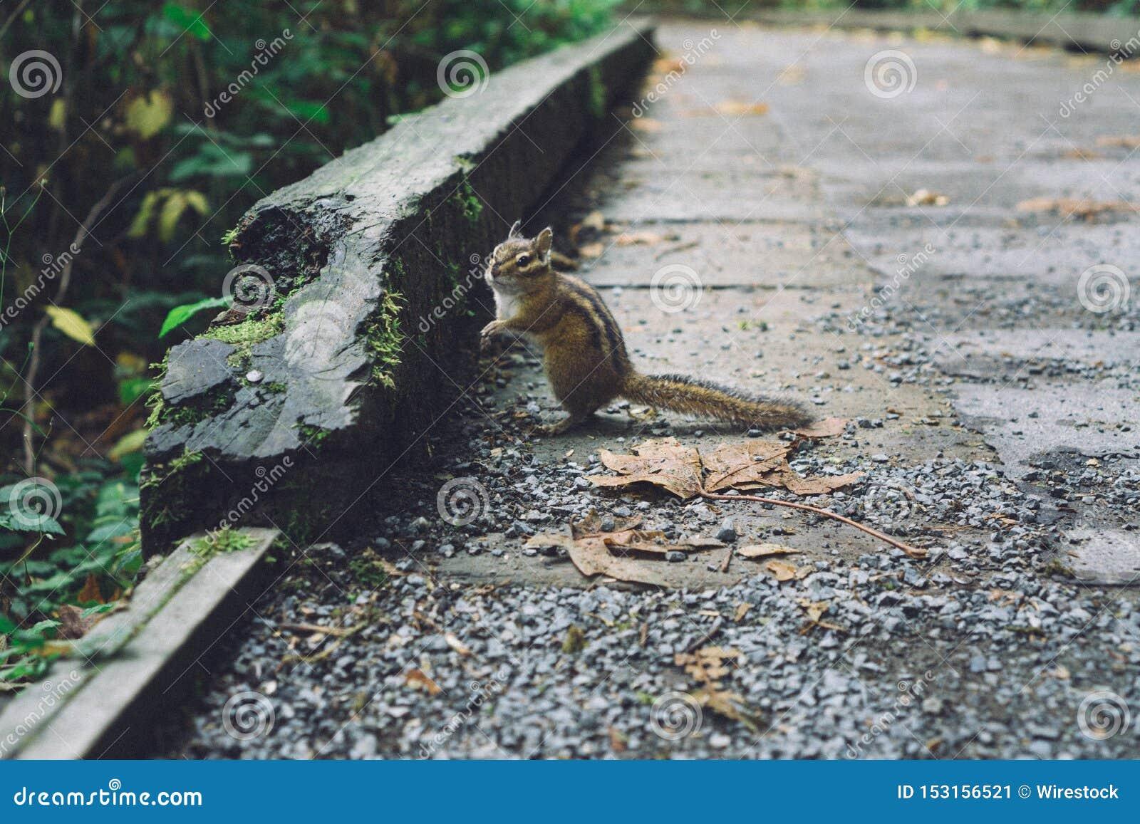 Close up disparado de uma posição bonita bonito do esquilo em rochas perto de uma floresta
