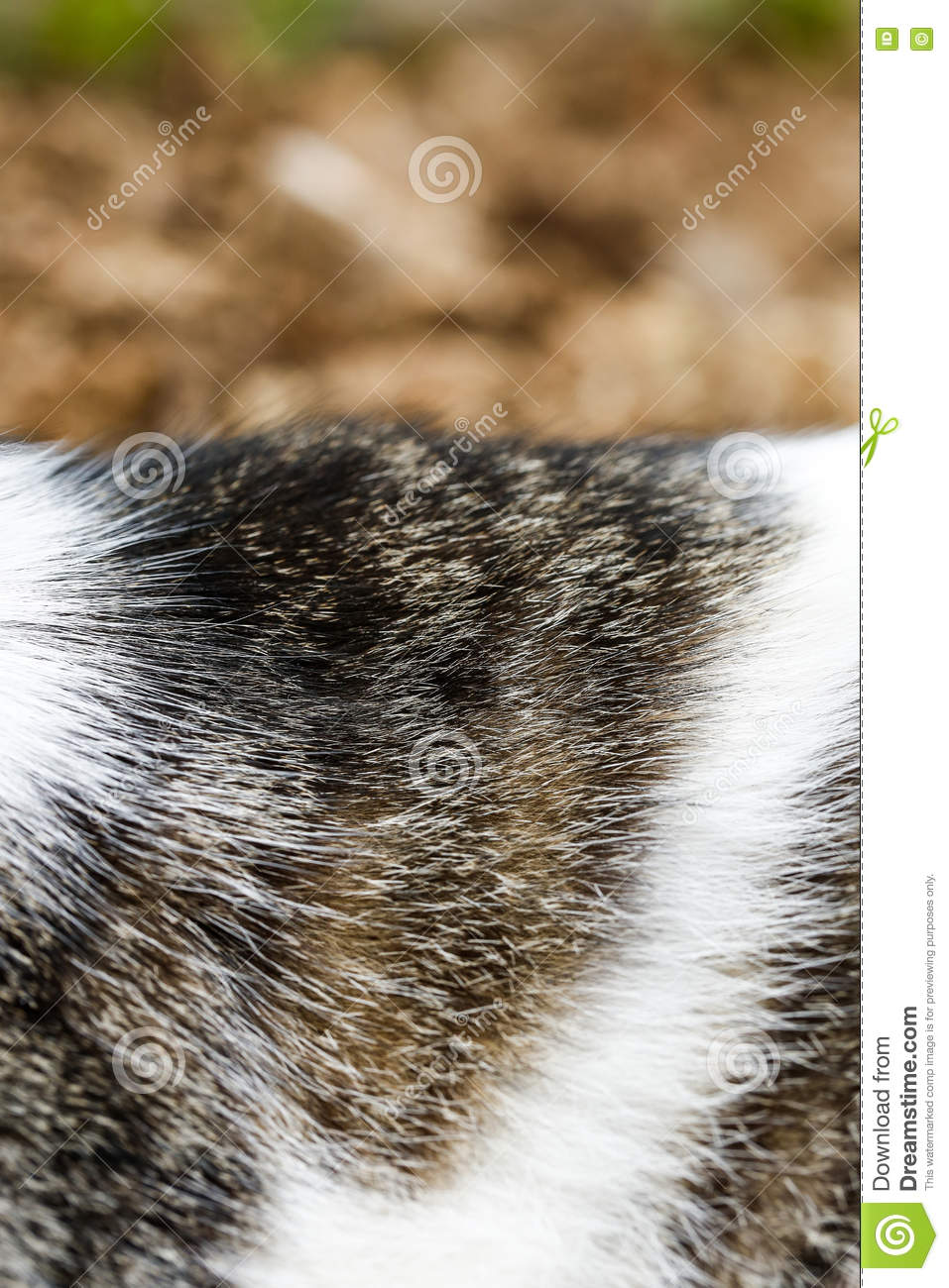 Close-up of domestic tiger patterned cat fur
