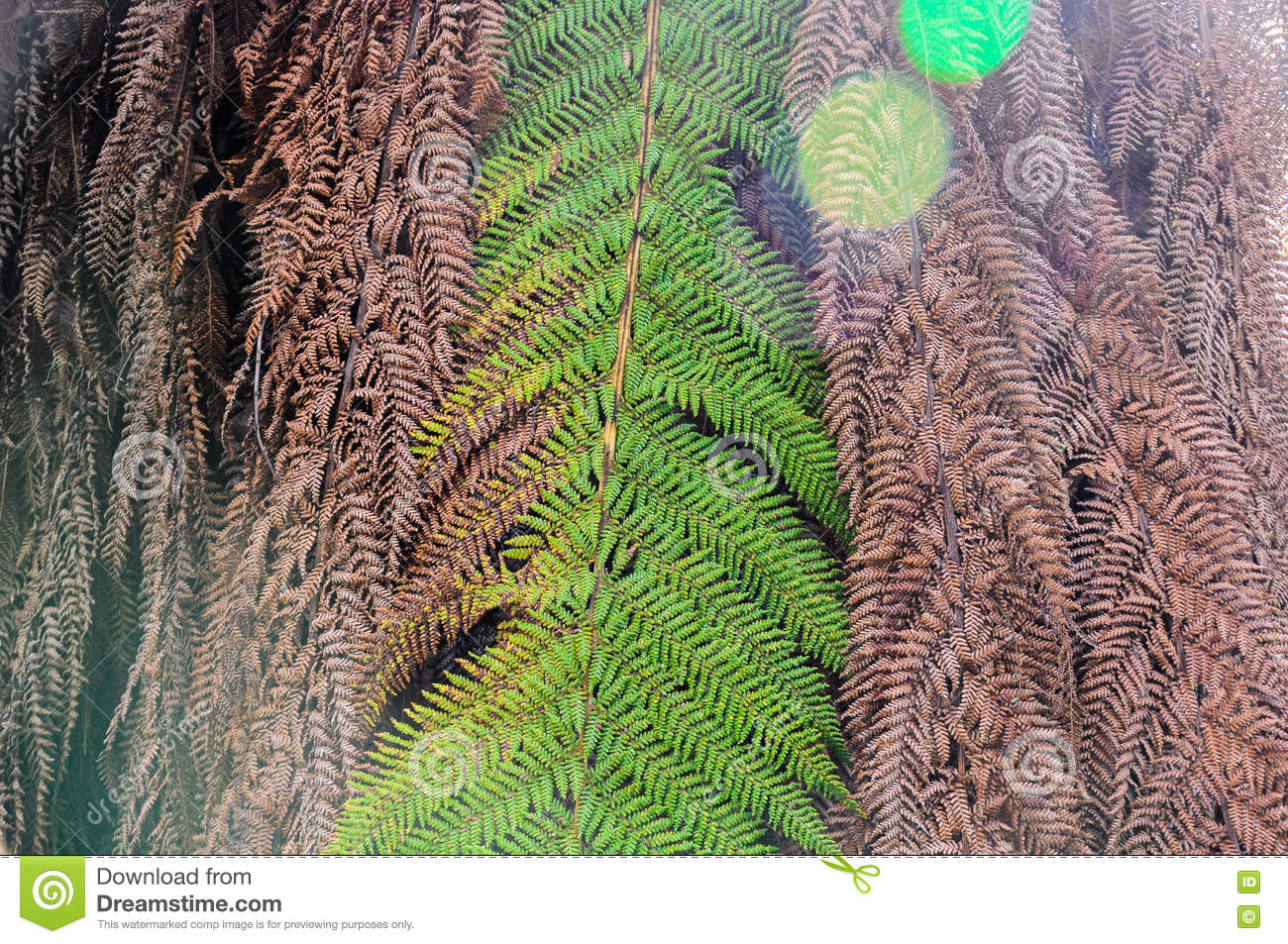 Preserving Tree Branches For Decoration Close Up Dried Leaves Of Palm Tree Nature Abstract Background