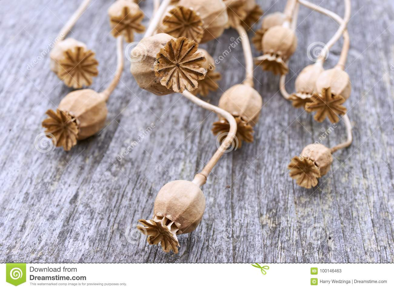 Close Up Of Dry Poppy Seed Pods Stock Image Image Of Background