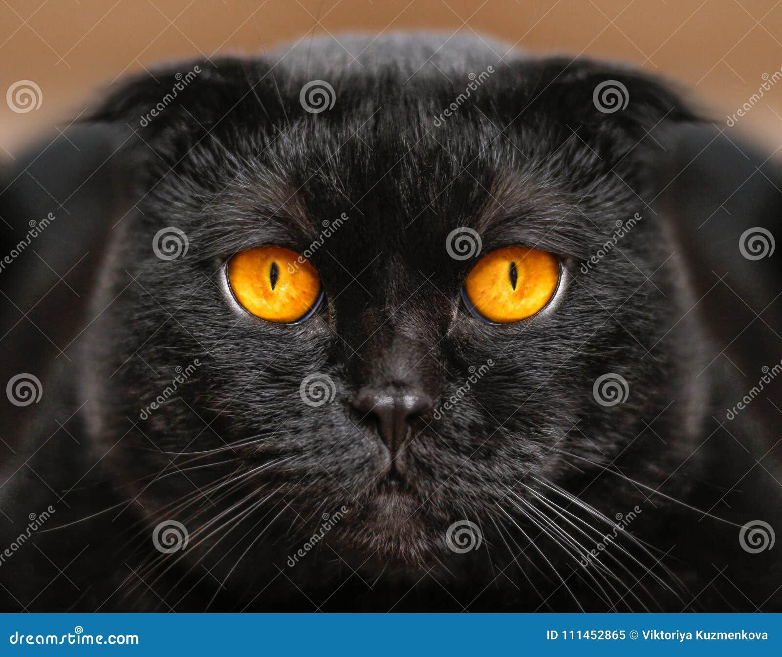 gratis zwart poesje close-up