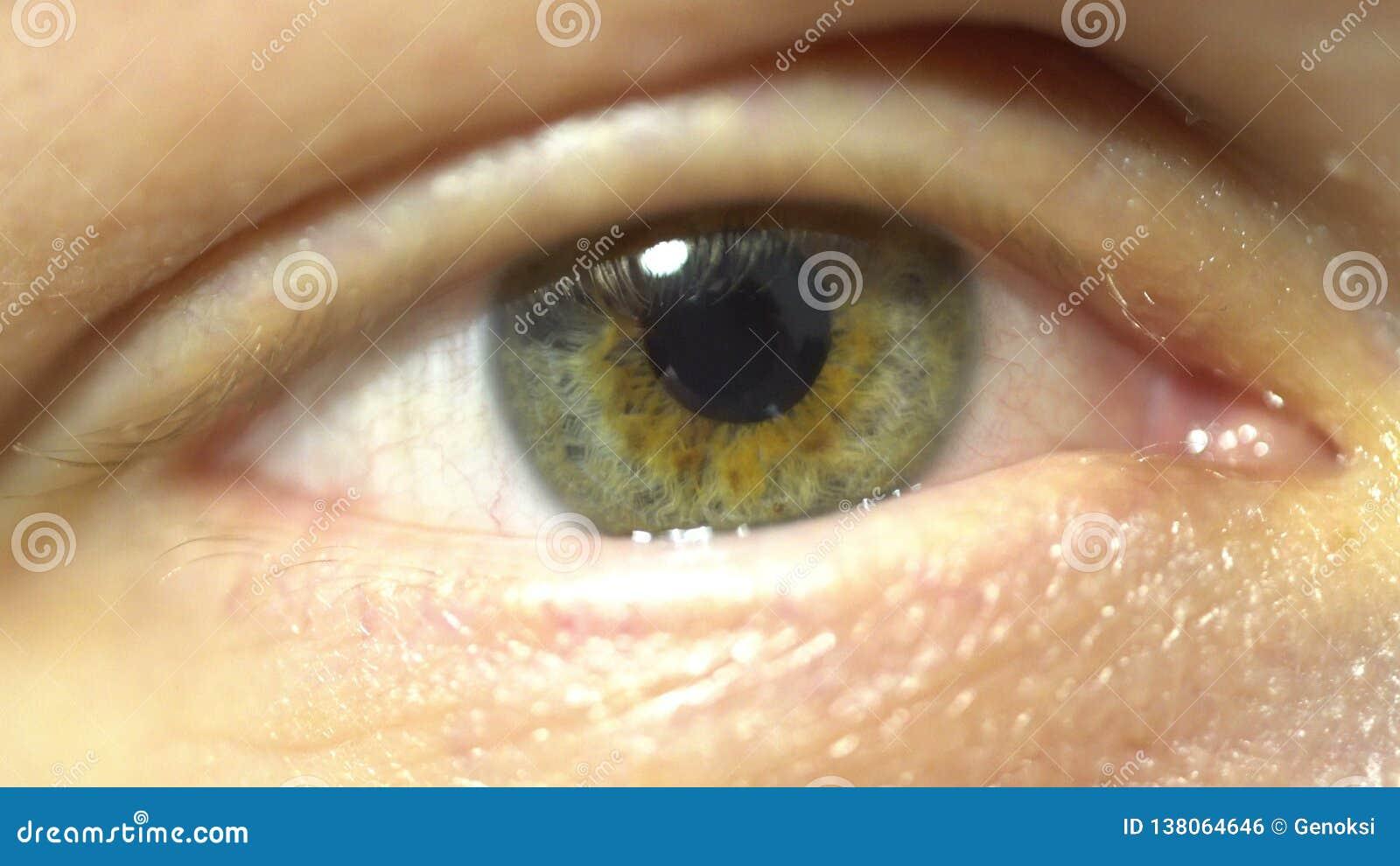Close-up extremo do olho verde da íris e do aluno que dilatam-se e que contratam Muito finamente anatomia humana detalhada, pisca