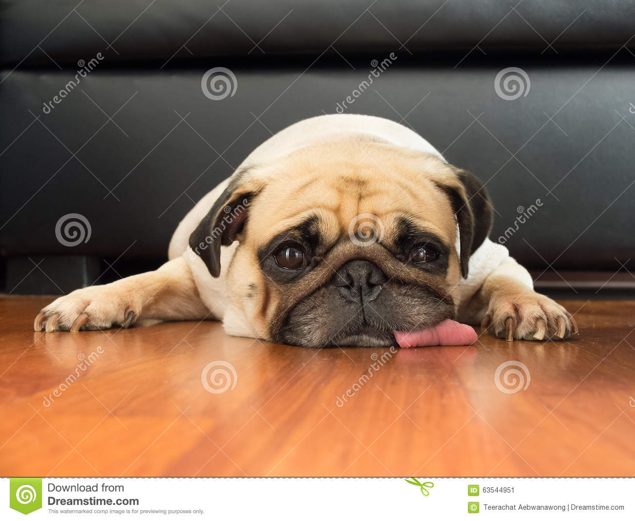 Close-up face of Cute pug puppy dog sleeping rest open eye by chin and tongue lay down floor
