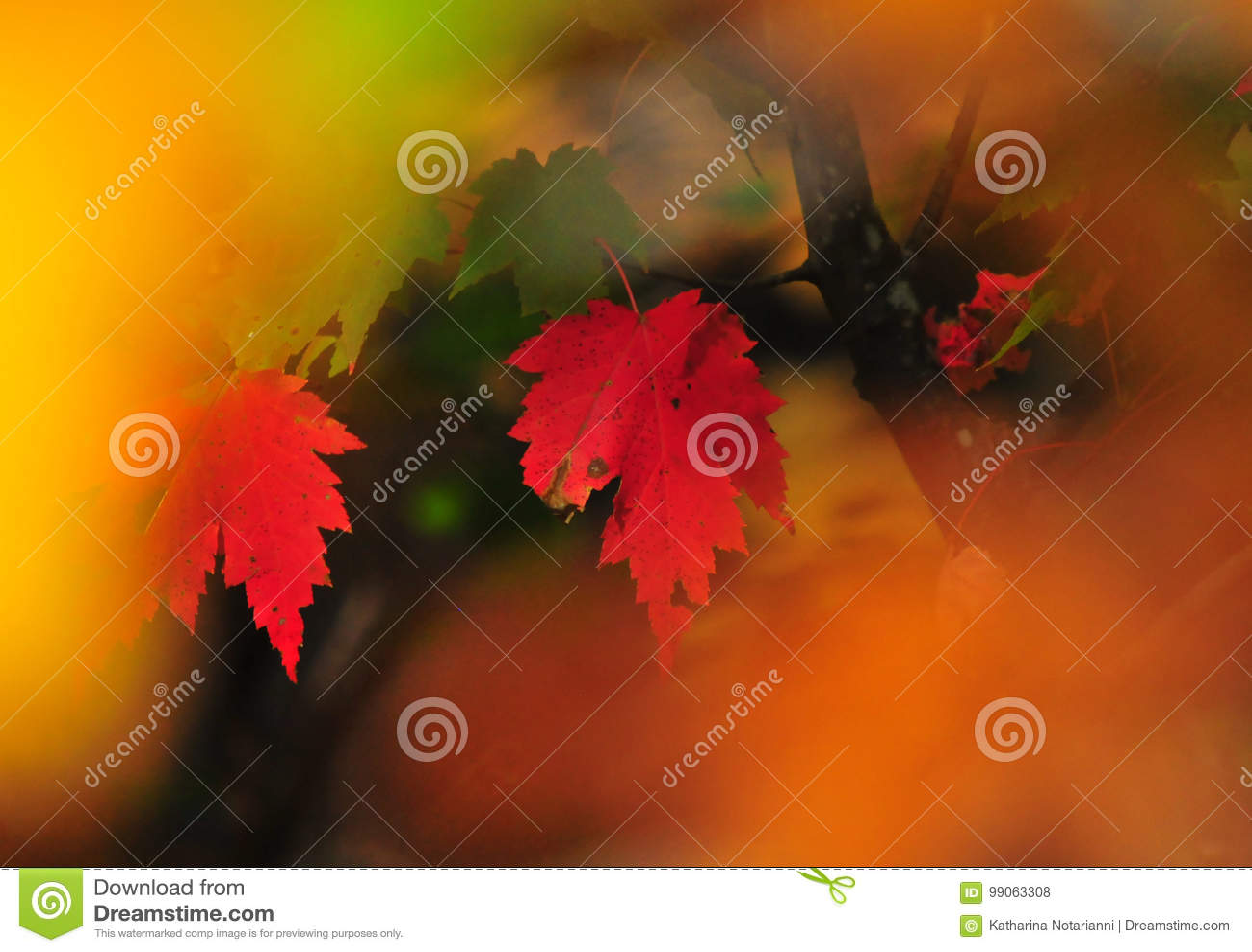 Fall Foliage Autumn Leaves Close Up Background