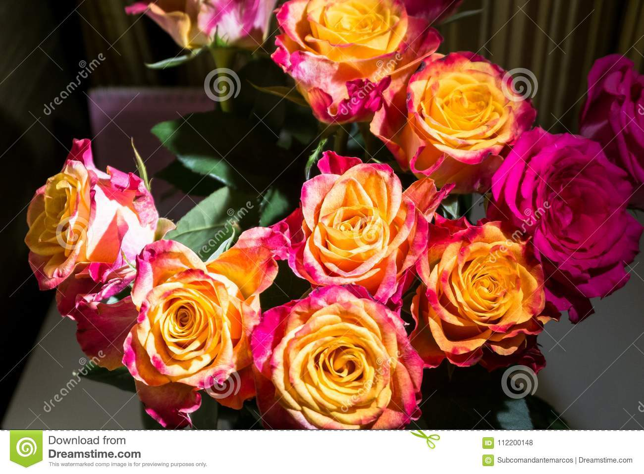 Close-up of festive fresh rose with original yellow and crimson coloration.