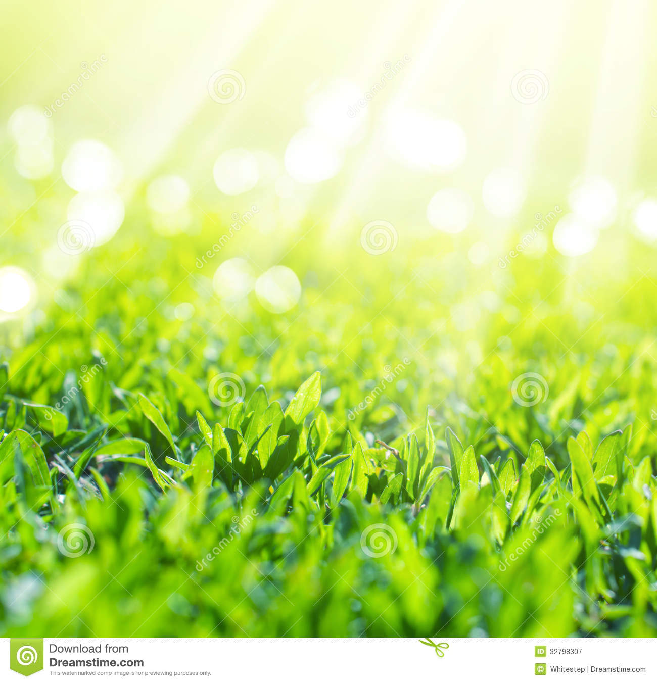 Close Up Of Field Grass In Sun Rays Stock Image - Image of ...