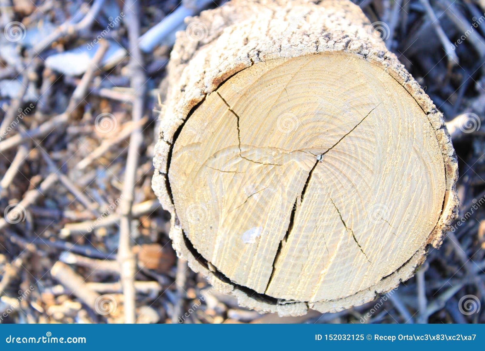 Close-up firewood and tree stump.