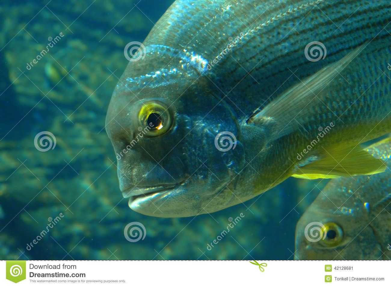 Close Up Of Fish Head And Fins Stock Image Image Of Nature