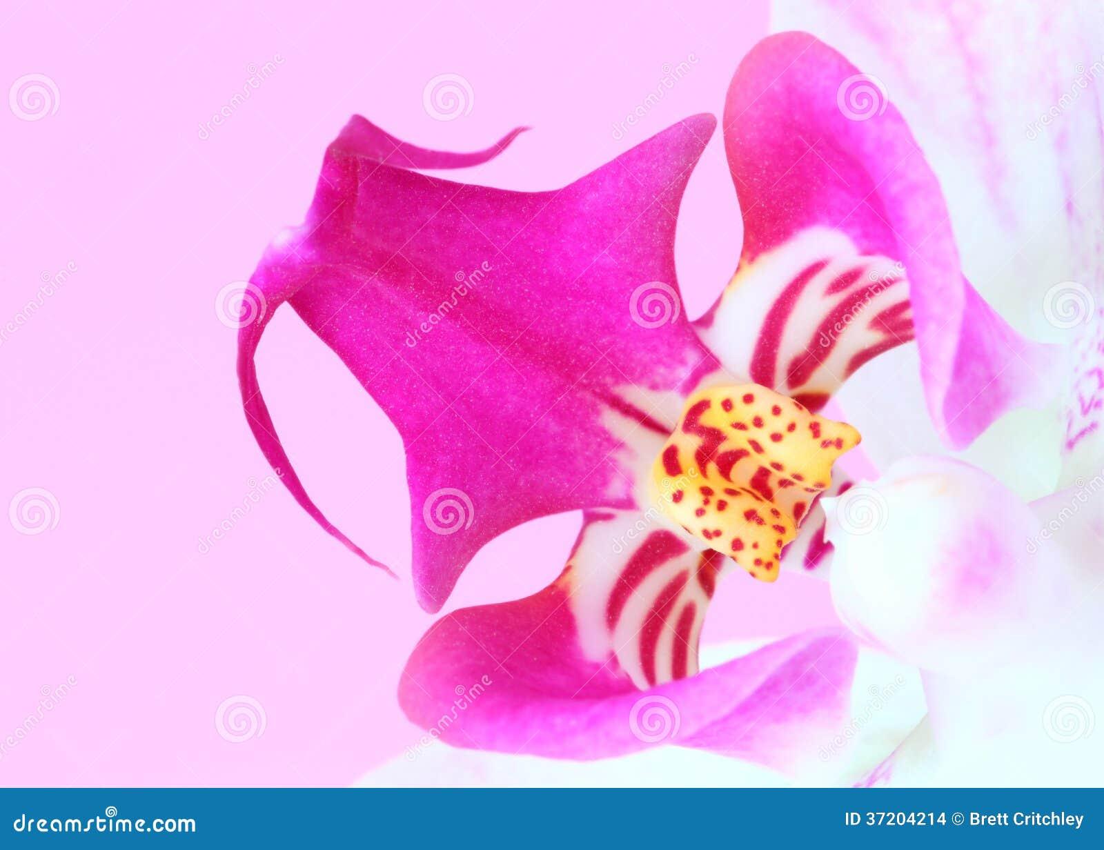 Close up flower stock photo. Image of closeup, carpel - 37204214