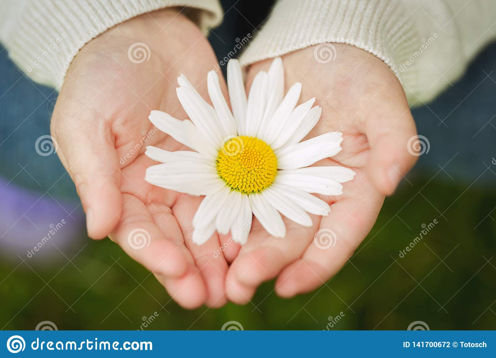 Close-up of a flower in childs hands