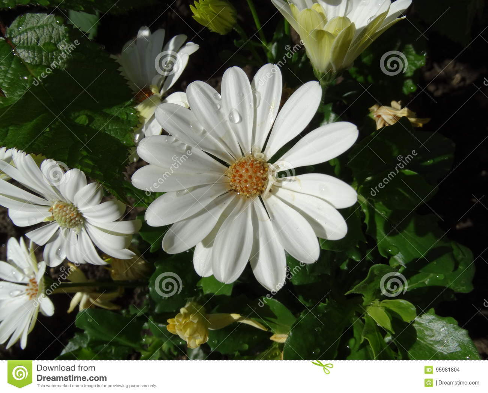 Close Up Flowers Stock Photo Image Of Very Closeups 95981804