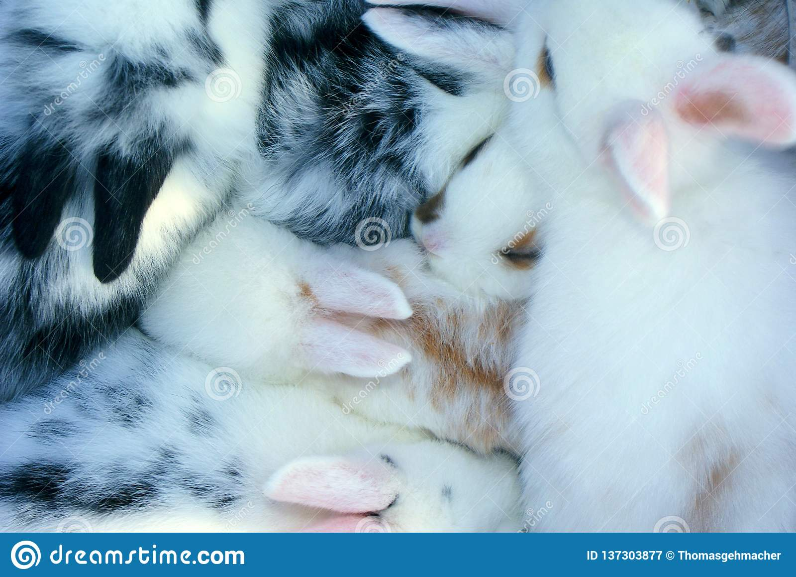 Close up of fluffy bunny babies nestling
