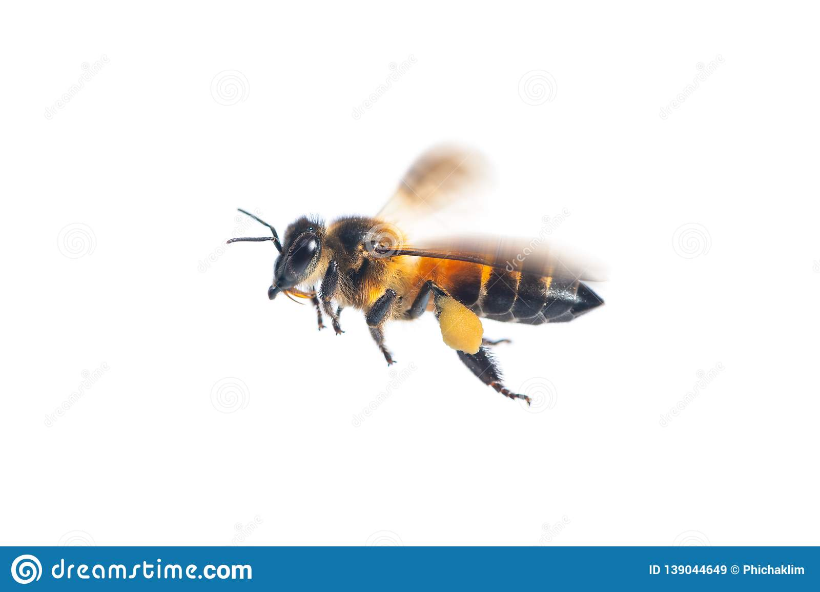 A close up of flying bee on white background