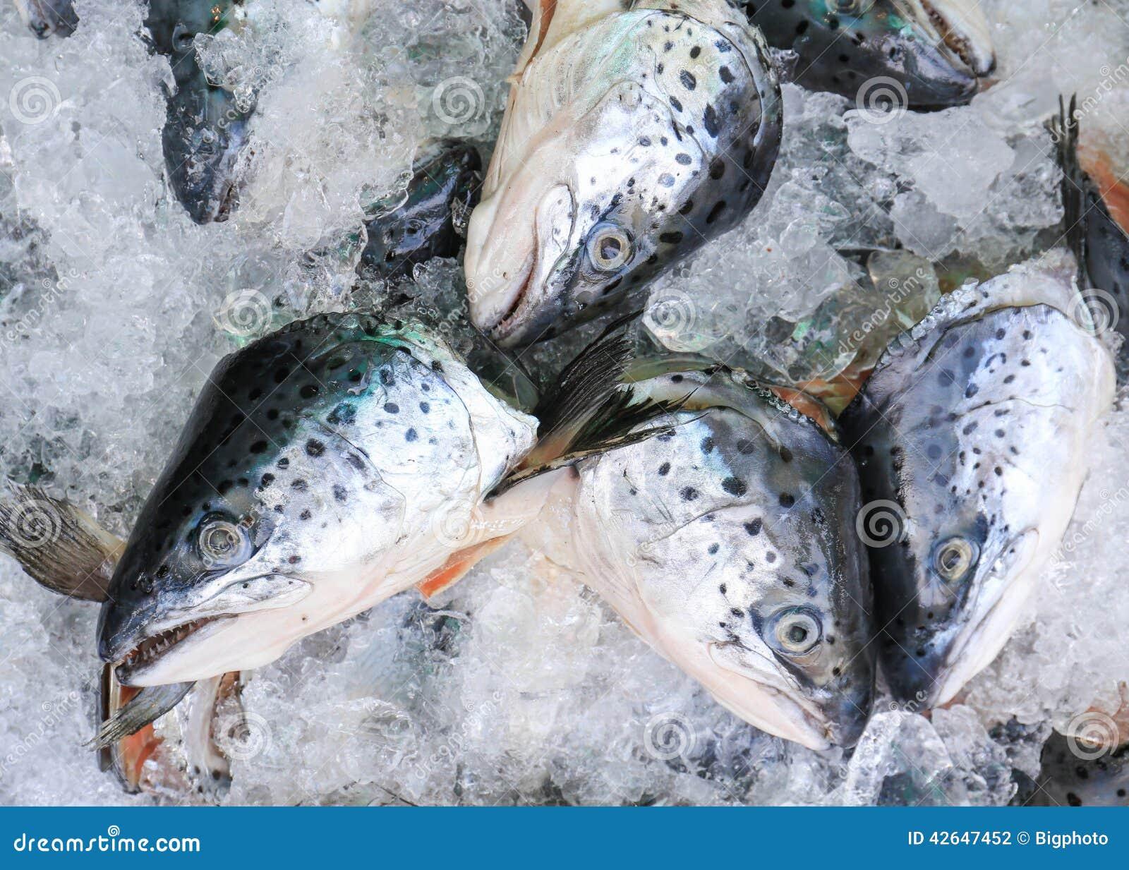Close up of fresh salmon fish on open market