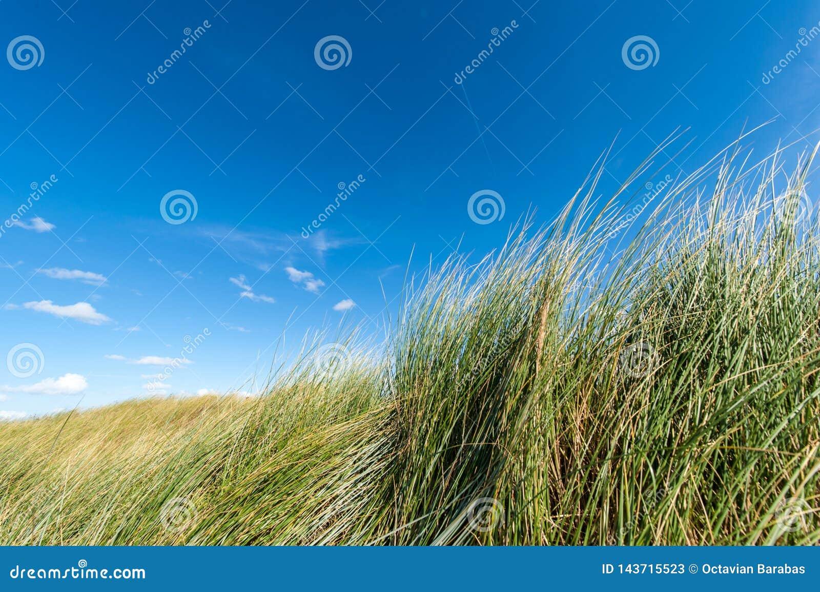 Close up of grass on sandy beach