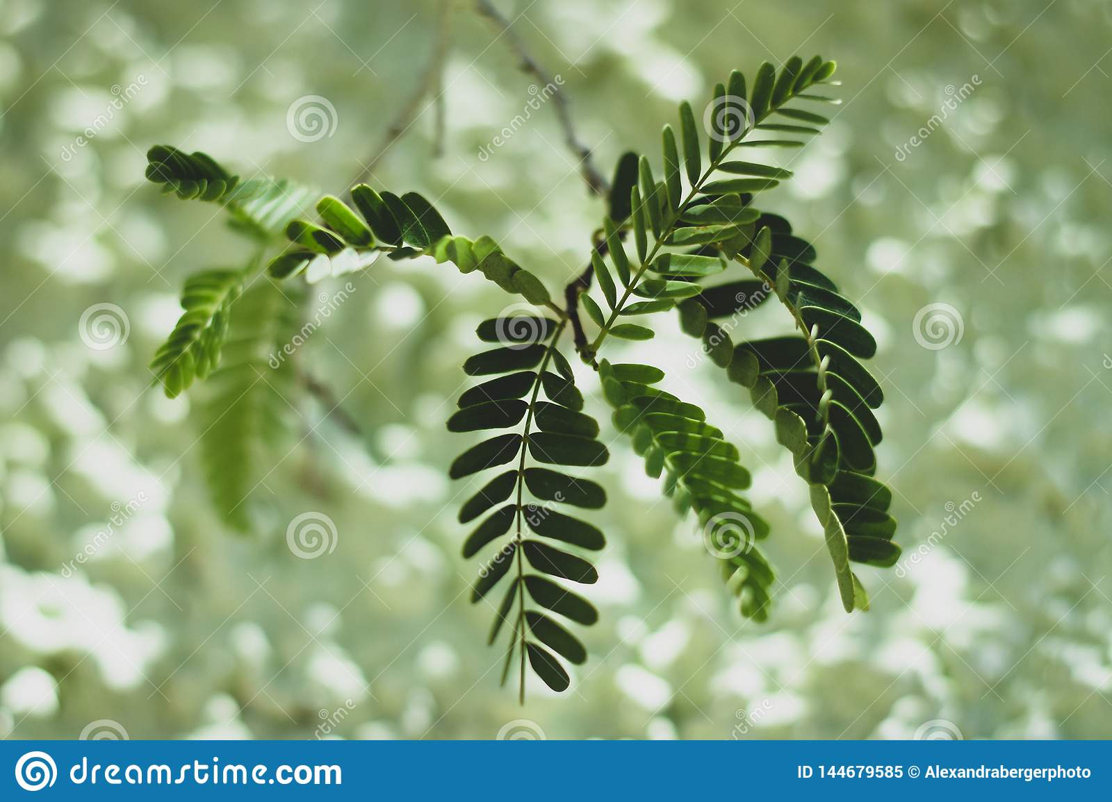 Green leaves on green background