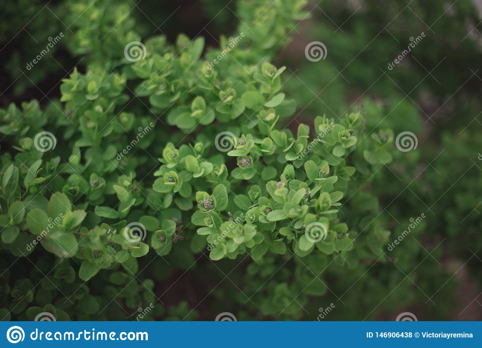 Close-up of green tree bush on flowerbed