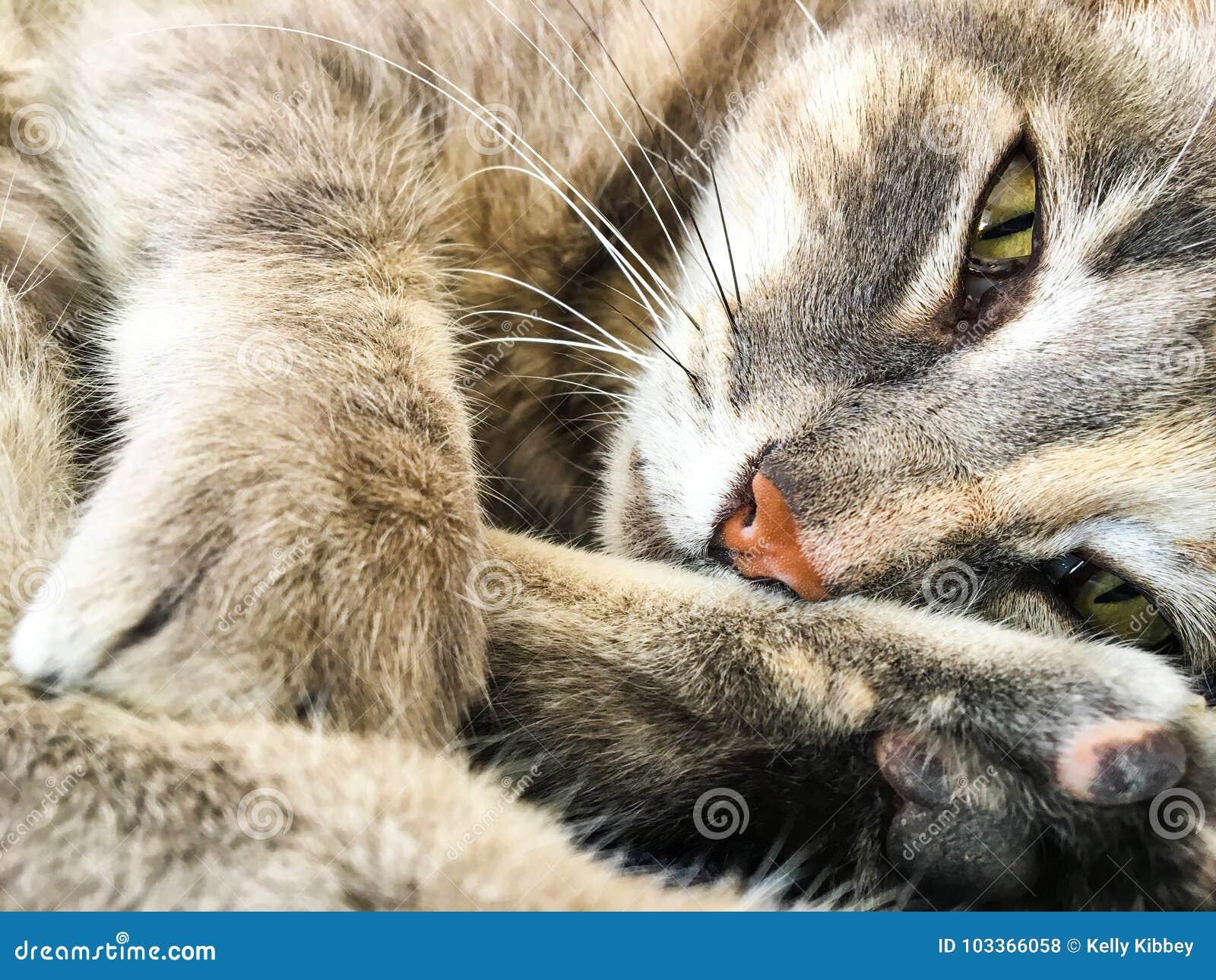 GRAY TABBY ZEN CAT