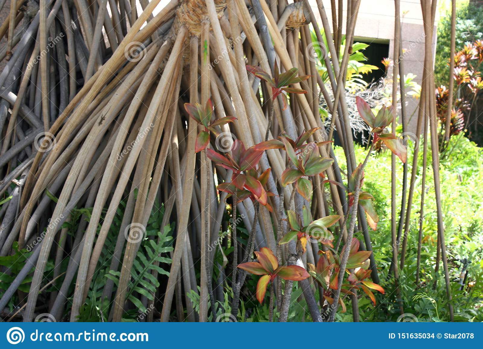 Close up of a Hala Tree prop roots