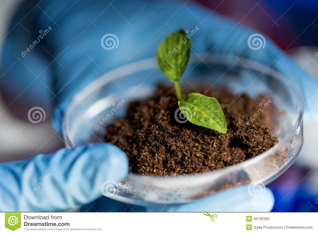 Close up of hands with plant and soil in lab stock photo for Soil and plant lab