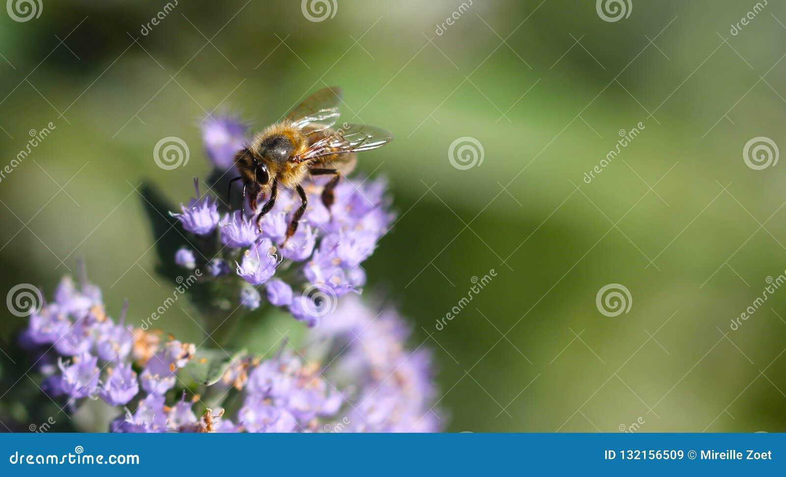 Bee working hard in garden