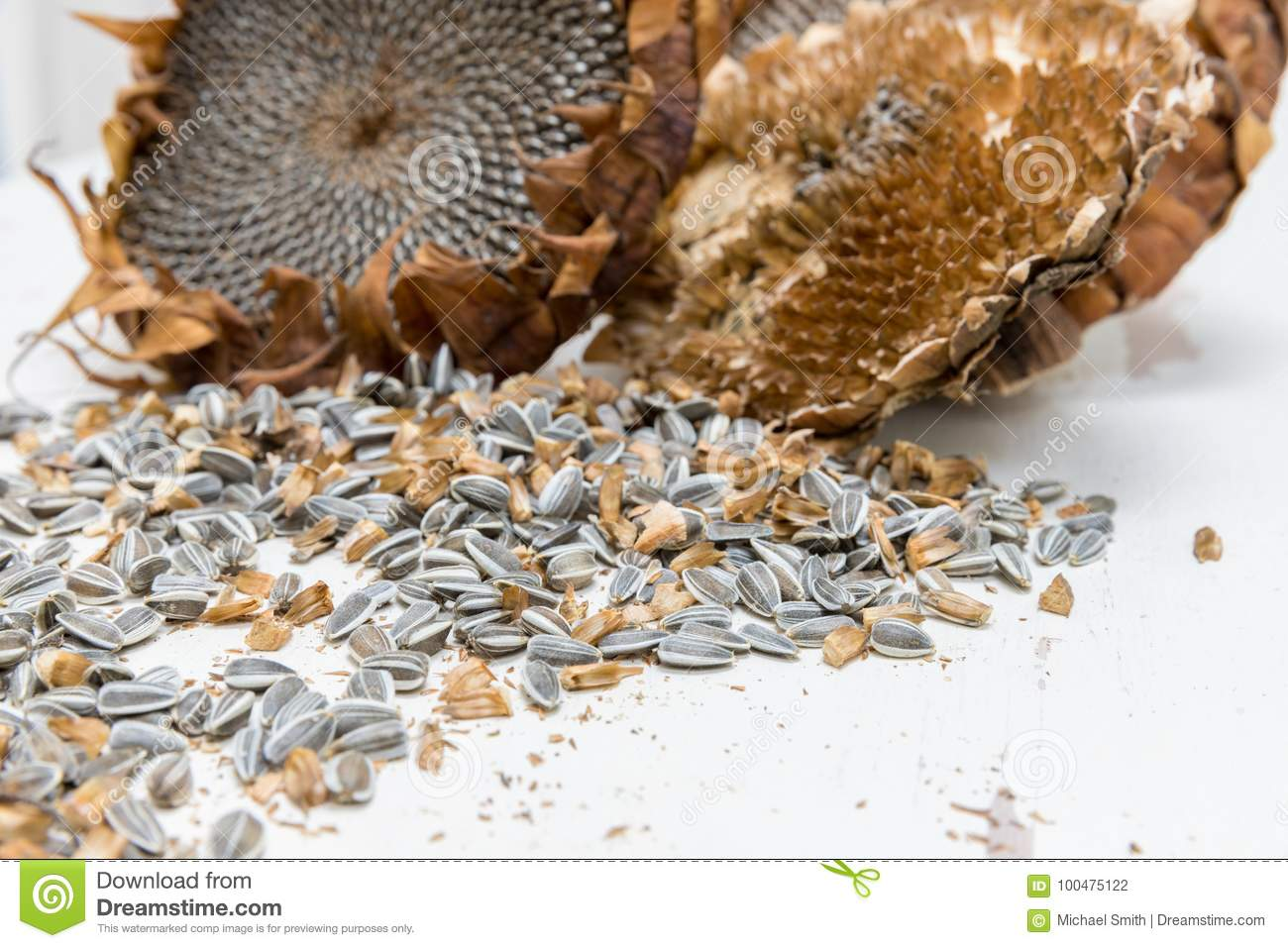 Close up harvested sunflower seeds