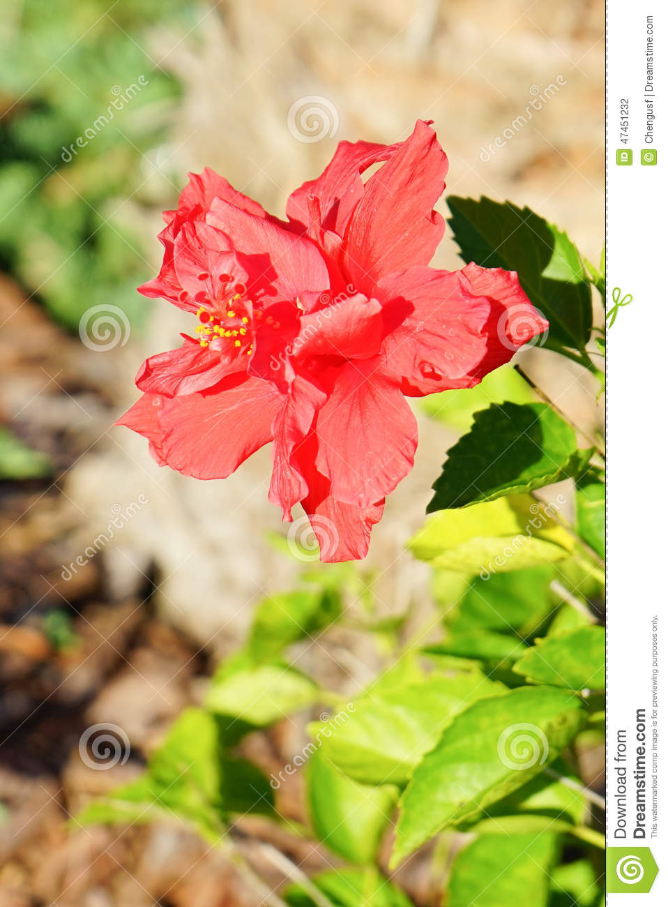Not red asian flower very valuable
