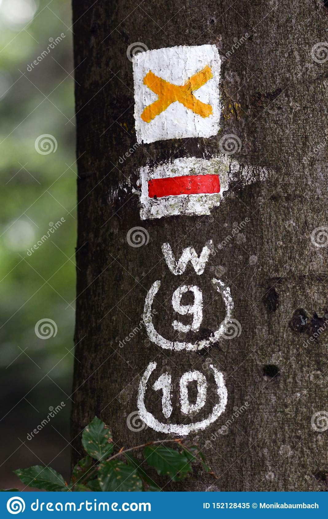 Close up of hiking trail blazing markings on tree in forest