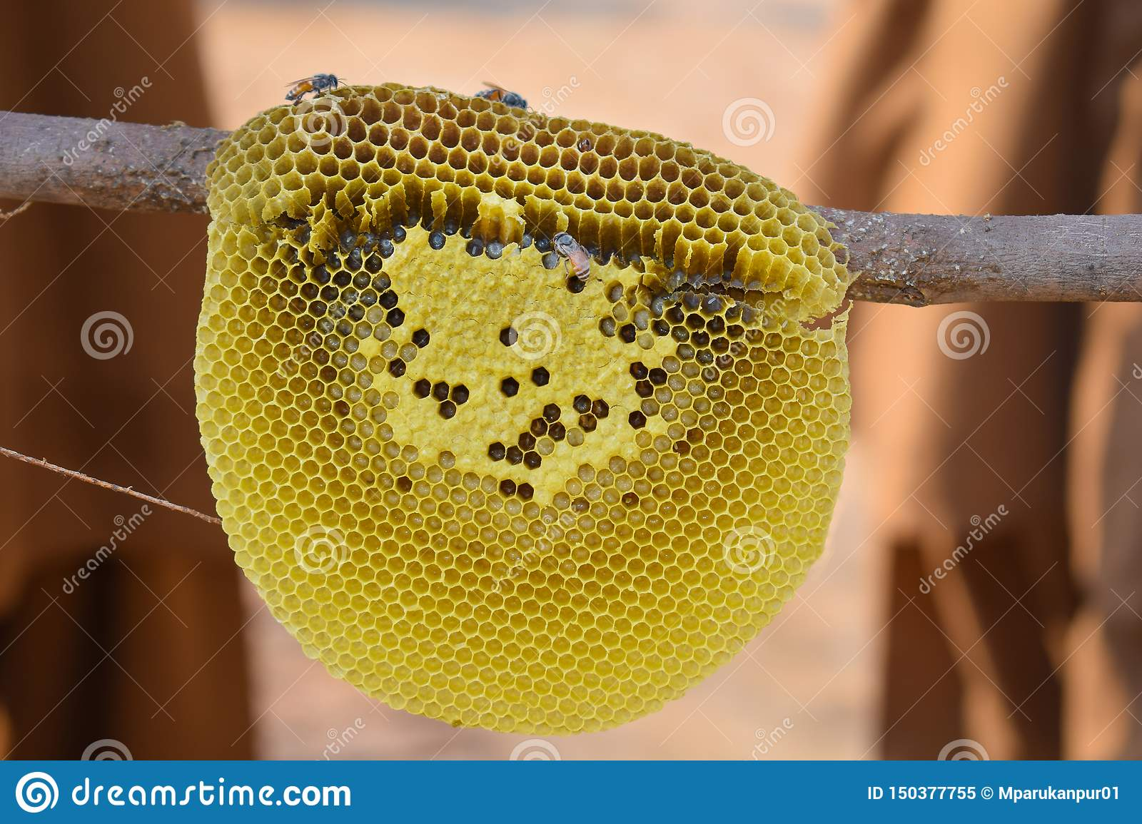 Close up of honey bees on honey comb