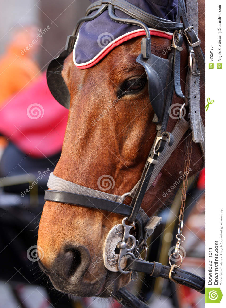 A Close Up Of Bad Makeup: Close-up Of A Horse In The City Editorial Photo