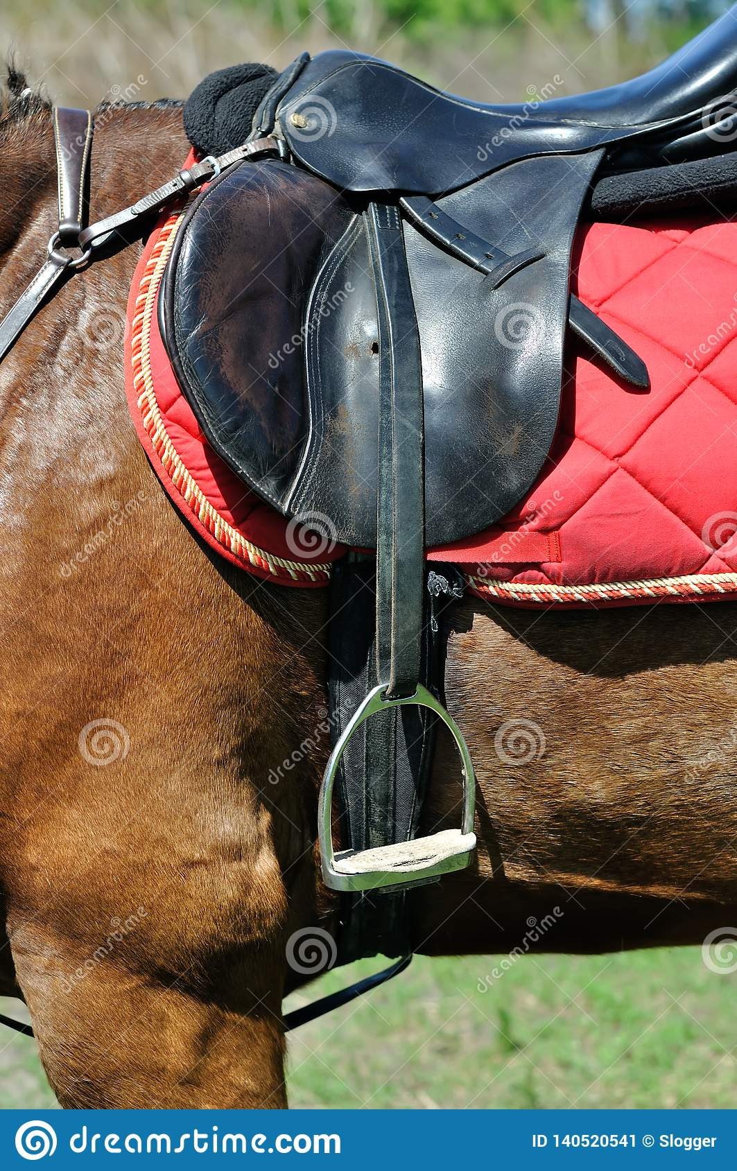 Close Up Of A Horse Harness Stock Image