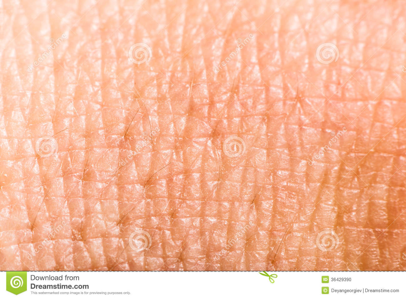 picture of up human skin macro epidermis texture csp17528076 search stock photography up human skin macro epidermis stock photo image 36429390